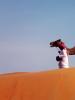 Дешева верблюжа сила